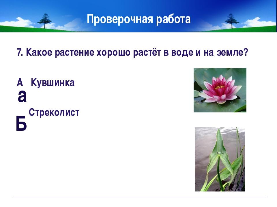 Правила друзей луга. Не рвите на лугу цветы. Не ловите бабочек. Не разоряйте...
