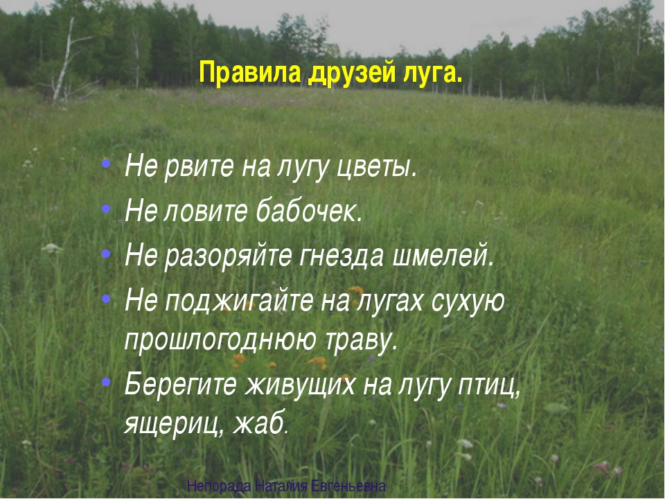 СЪЕДОБНЫЕ ЯГОДЫ малина Непорада Наталия Евгеньевна