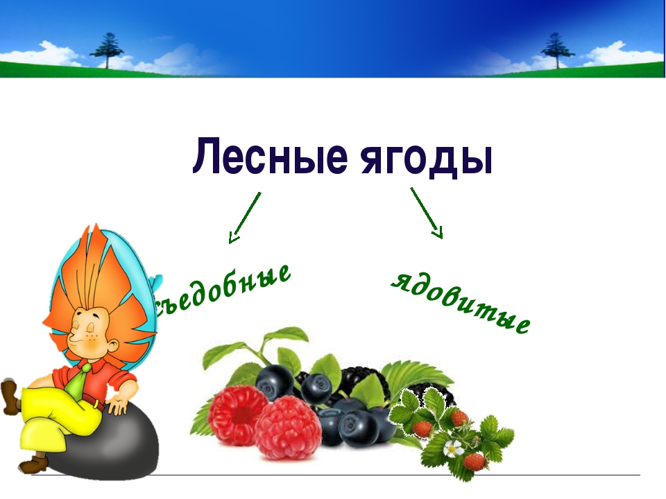 СЪЕДОБНЫЕ ЯГОДЫ брусника Непорада Наталия Евгеньевна