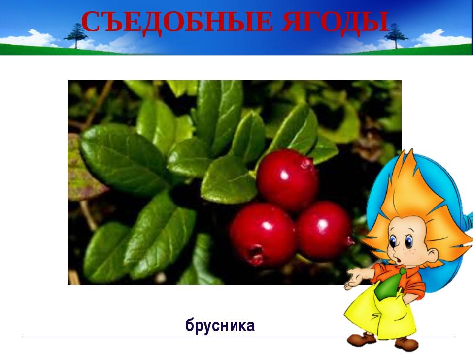 Работа по тетради с.54 Непорада Наталия Евгеньевна