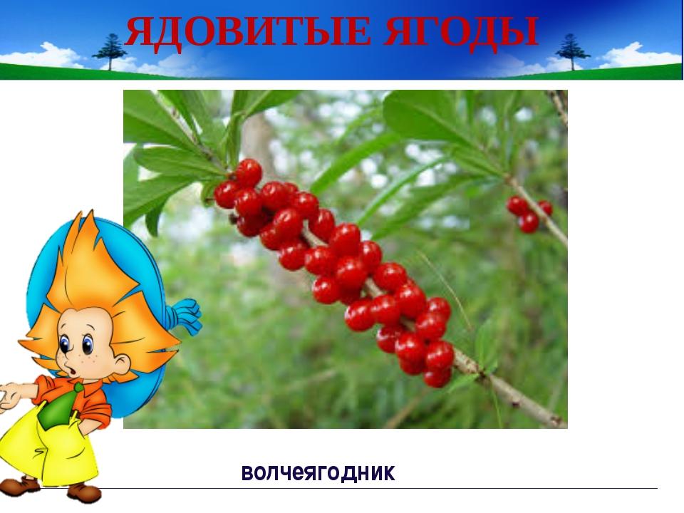 Игра «Что в твоем лукошке?» Какие ягоды остались? Почему? Проверь себя Непор...