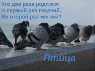 Кто два раза родился: В первый раз гладкий, Во второй раз мягкий? Птица
