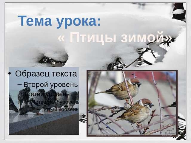 Тема урока: « Птицы зимой»