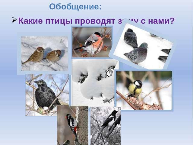 Обобщение: Какие птицы проводят зиму с нами?