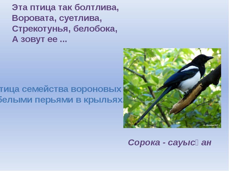 Эта птица так болтлива, Воровата, суетлива, Стрекотунья, белобока, А зовут ее...