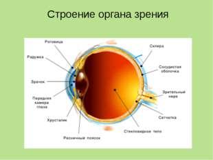 Вспомогательные части глаза Придатки и части глаза Строение Функции Брови Вол