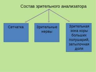 Схема строения зрительного анализатора Периферический отдел 1 – сетчатка Пров