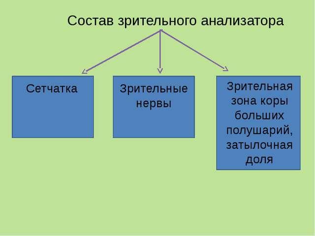 Схема строения зрительного анализатора Периферический отдел 1 – сетчатка Пров...