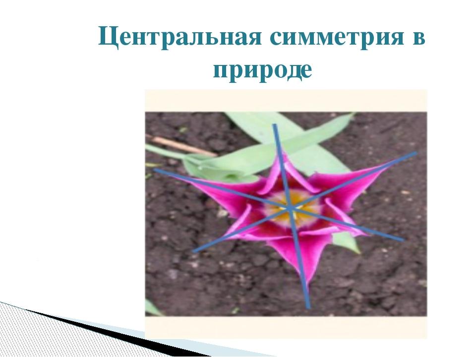 Центральная симметрия в природе