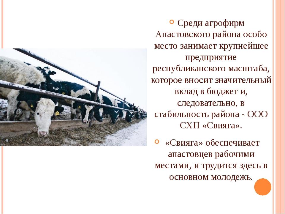 Среди агрофирм Апастовского района особо место занимает крупнейшее предприят...