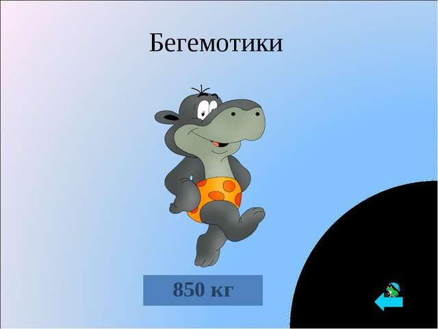 Бегемотики 850 кг