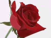 http://im3-tub-ru.yandex.net/i?id=51416571-30-72&n=21
