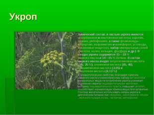 Укроп Химический состав: в листьях укропа имеютсяаскорбиноваяиникотиновая