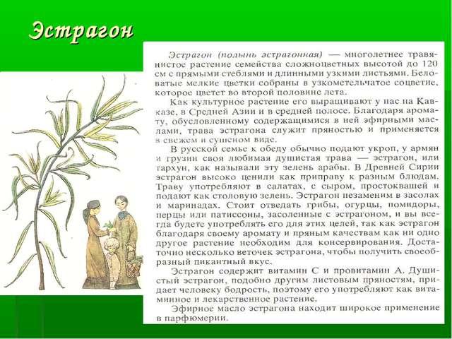Эстрагон