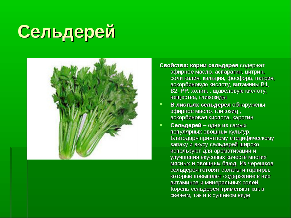 Сельдерей Свойства: корни сельдереясодержат эфирное масло, аспарагин, цитрин...