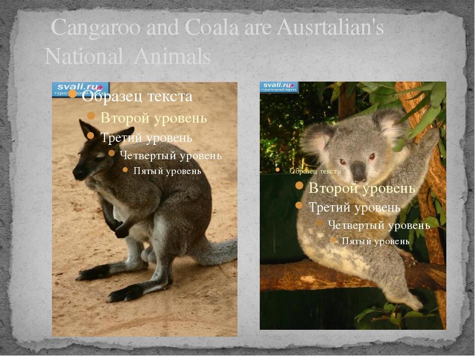Cangaroo and Coala are Ausrtalian's National Animals