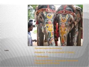 India Презентацию выполнили: Учащиеся 7 «а» класса МОУ СОШ №3 г. Хвалынска См