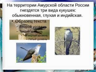 На территории Амурской области России гнездятся три вида кукушек: обыкновенна
