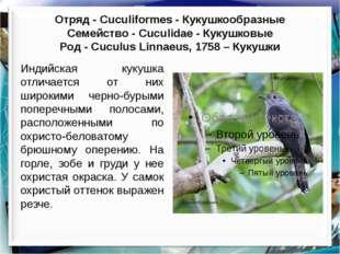 Отряд - Cuculiformes - Кукушкообразные Cемейство - Cuculidae - Кукушковые Ро