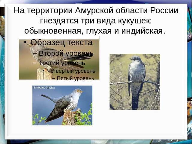 На территории Амурской области России гнездятся три вида кукушек: обыкновенна...