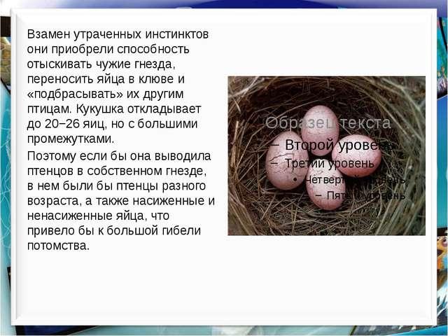 Взамен утраченных инстинктов они приобрели способность отыскивать чужие гнезд...
