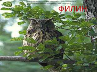 ФИЛИН Образовательный портал «Мой университет» – www.moi-universitet.ru Факу