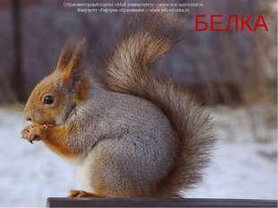 БЕЛКА Образовательный портал «Мой университет» – www.moi-universitet.ru Факул