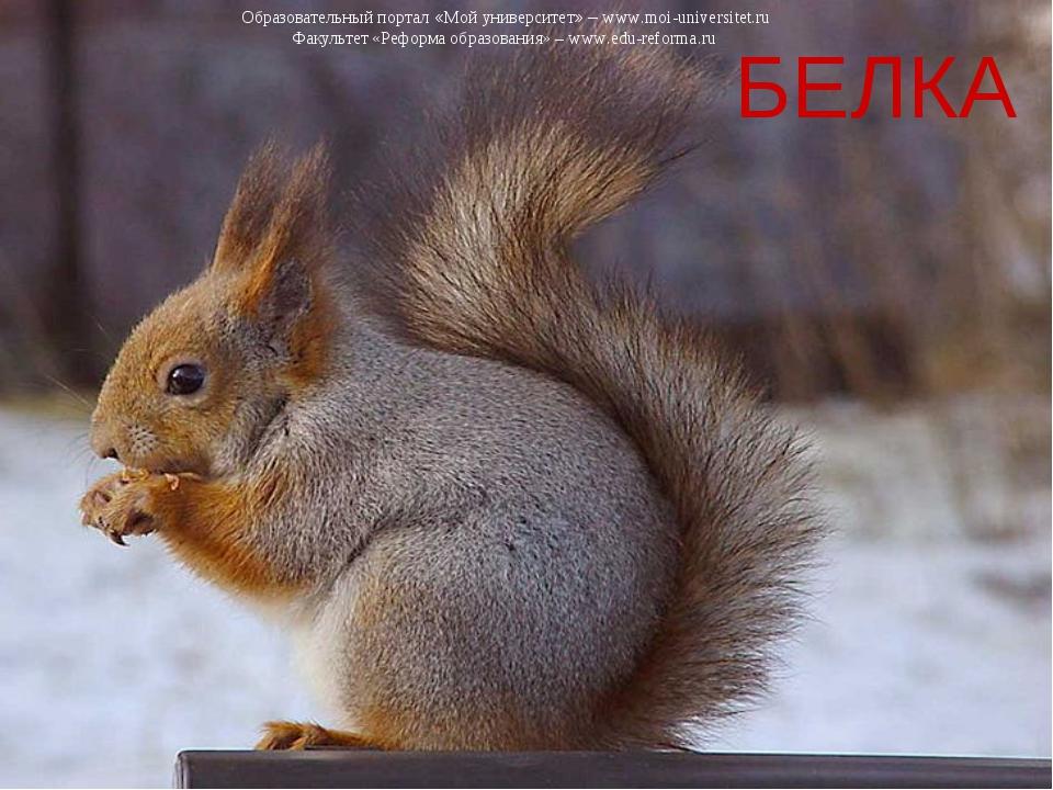 БЕЛКА Образовательный портал «Мой университет» – www.moi-universitet.ru Факул...