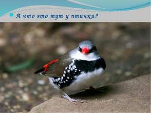 А что это тут у птички?