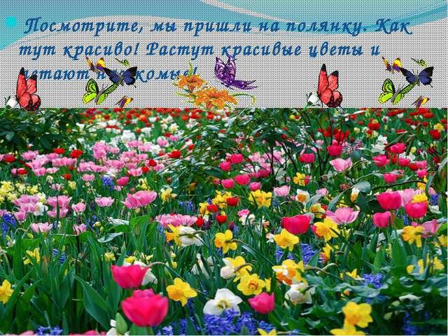 Посмотрите, мы пришли на полянку. Как тут красиво! Растут красивые цветы и ле...