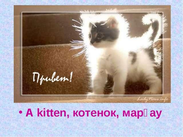 What is it looks like a cat, eats like a cat, walks like a cat, but still it...