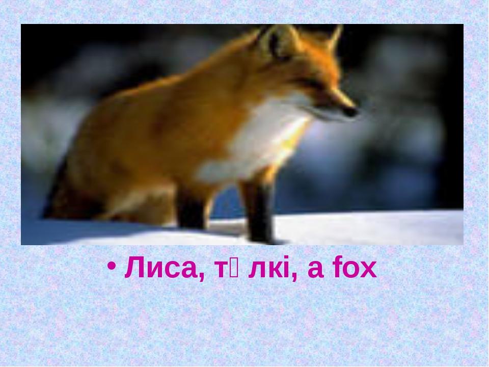 Длинное хвостище, рыжее волосище, сама хитрище. Лиса, түлкі, a fox
