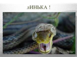 лИНЬКА !