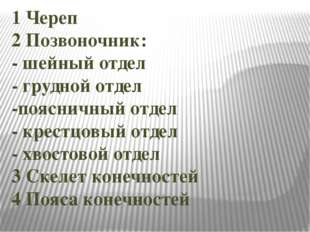 1 Череп 2 Позвоночник: - шейный отдел - грудной отдел -поясничный отдел - кре