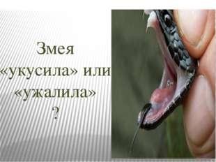 Змея «укусила» или «ужалила» ?