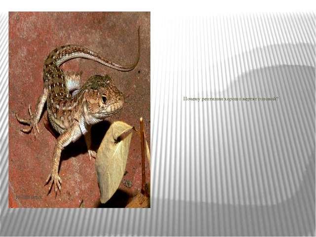 Почему рептилии хорошо вертят головой?