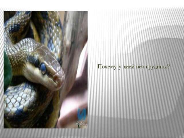 Почему у змей нет грудины?
