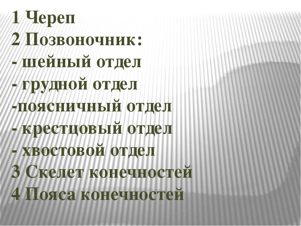 1 Череп 2 Позвоночник: - шейный отдел - грудной отдел -поясничный отдел - кре...