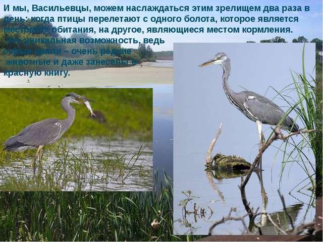 И мы, Васильевцы, можем наслаждаться этим зрелищем два раза в день: когда пти...