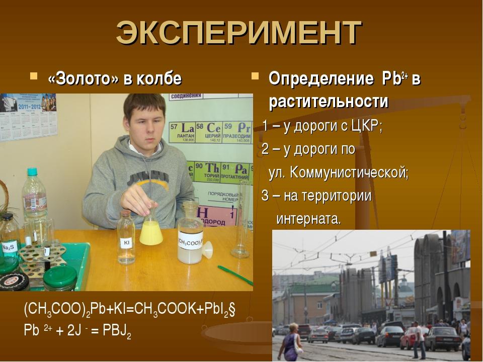 ЭКСПЕРИМЕНТ «Золото» в колбе Определение Pb2+ в растительности 1 – у дороги с...