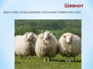 Шерсть овец которых разводят в Шотландии в Шевиотских горах.