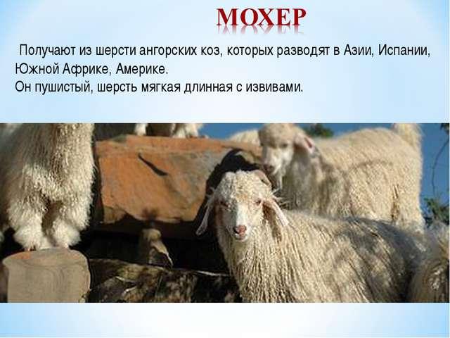Получают из шерсти ангорских коз, которых разводят в Азии, Испании, Южной Аф...