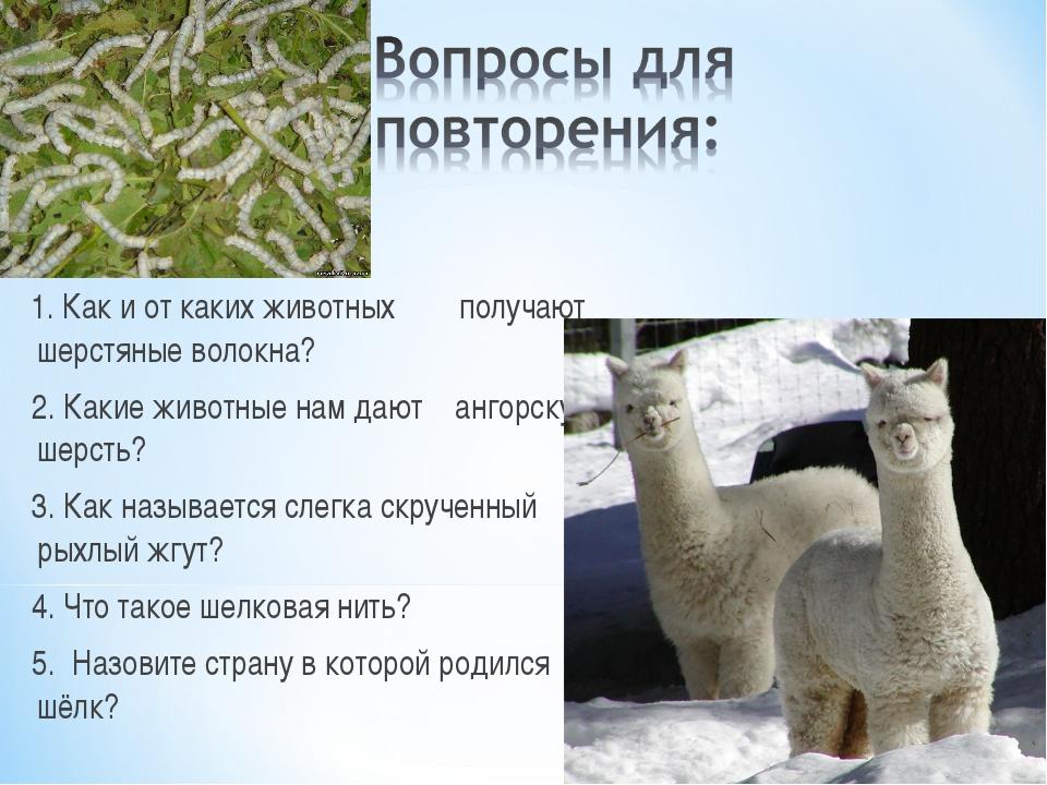 1. Как и от каких животных получают шерстяные волокна? 2. Какие животные нам...