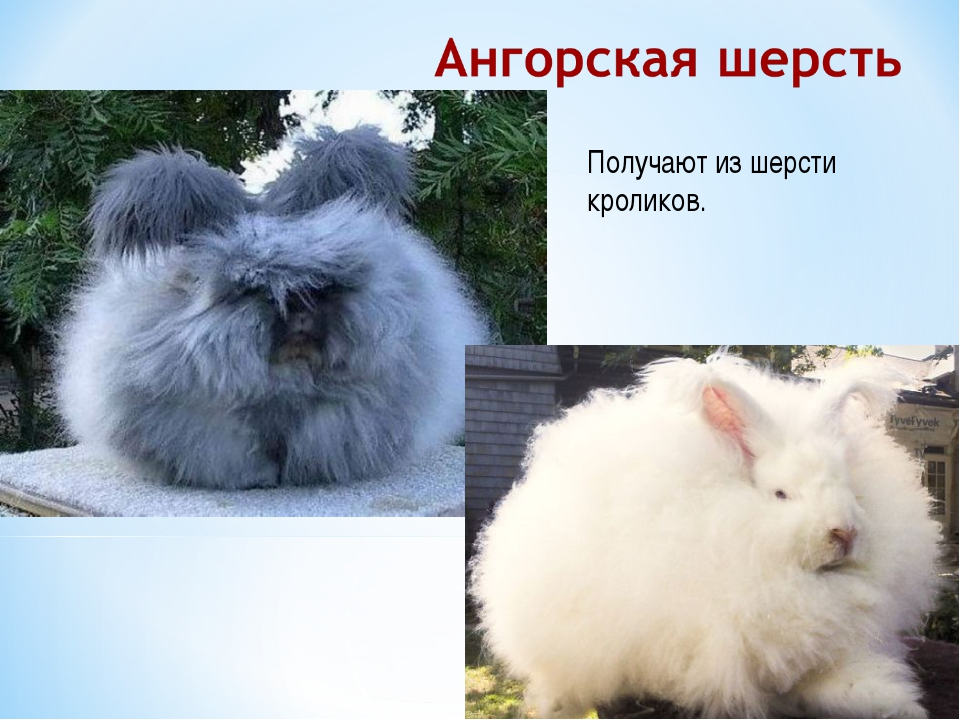 Получают из шерсти кроликов.