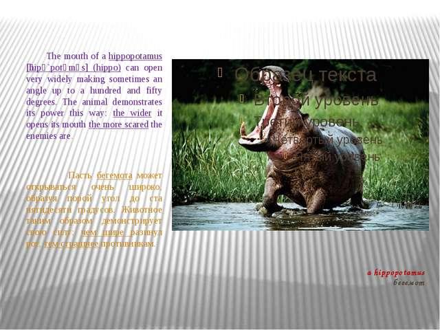a hippopotamus бегемот The mouth of a hippopotamus [ֽhipә`potәmәs] (hippo) ca...