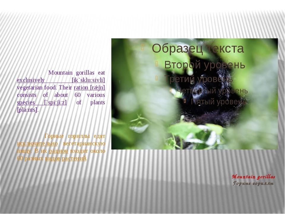 Mountain gorillas Горные гориллы Mountain gorillas eat exclusively [ik`sklu:s...