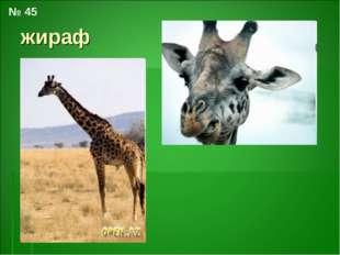 жираф № 45