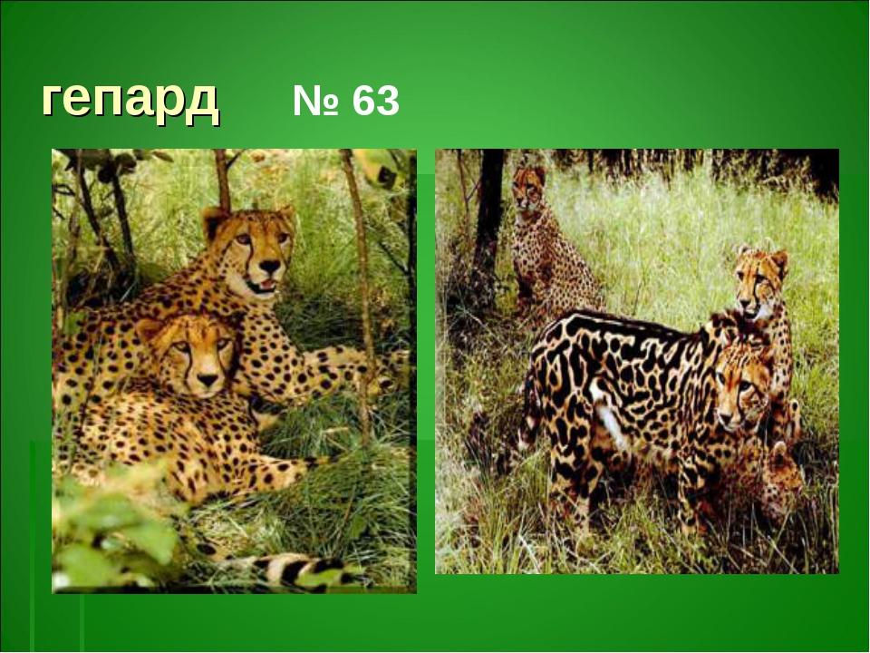 гепард № 63