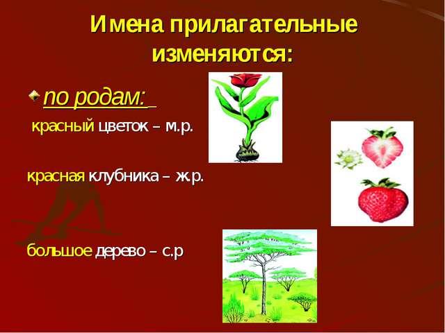 Имена прилагательные изменяются: по родам: красный цветок – м.р. красная клуб...