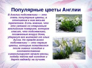 Популярные цветы Англии В Англии подснежники — это очень популярные цветы, а